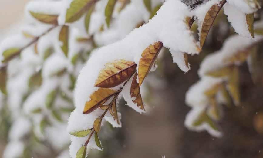 pervyi-sneg