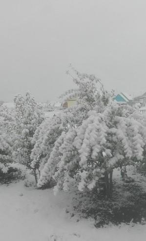sneg-v-oktyabre-v-bashkirii_7