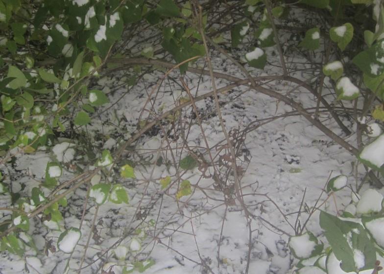 sneg-v-oktyabre-v-bashkirii_8