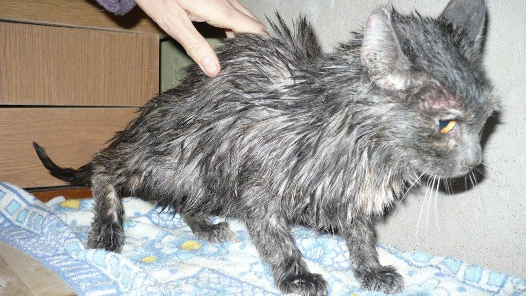 В Уфе спасли кошку из шахты лифта